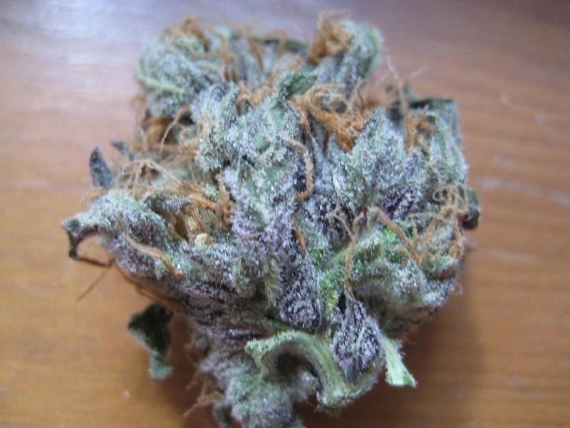 Purple Widow