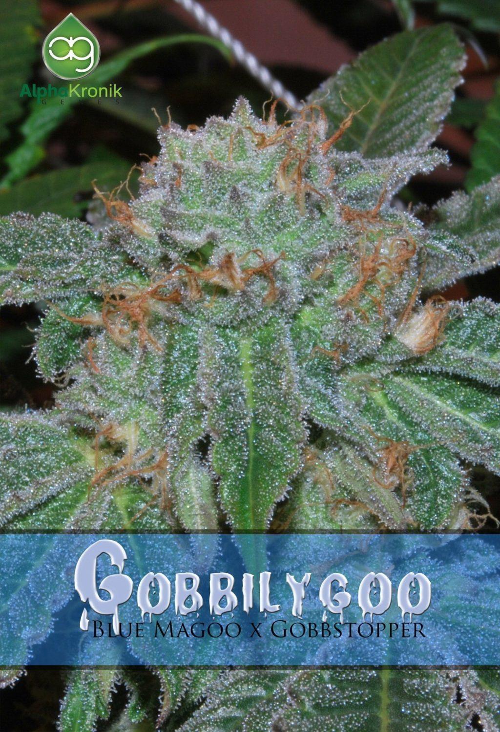 Gobbilygoo