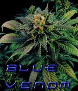 Blue Venom